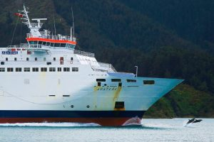 Interislander and Juming dolphin