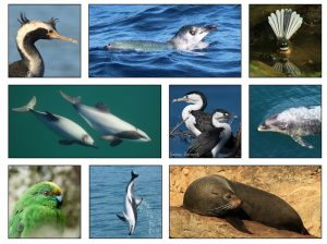 Wildlife and Dolphin Tour