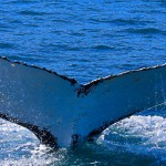 Whale and History tour