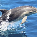 Watching bottlenose dolphins