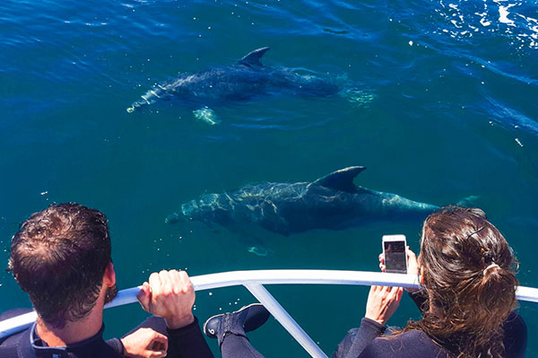 dolphin-watching-tour