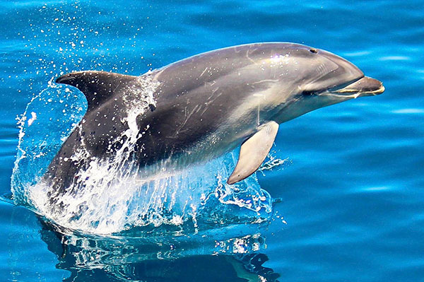 motuara-island-sanctuary-dolphin-watching-tour-600