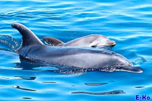 Dolphin Watching on Guide Cours