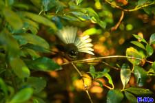 Fantail Kaipupu Sanctuary