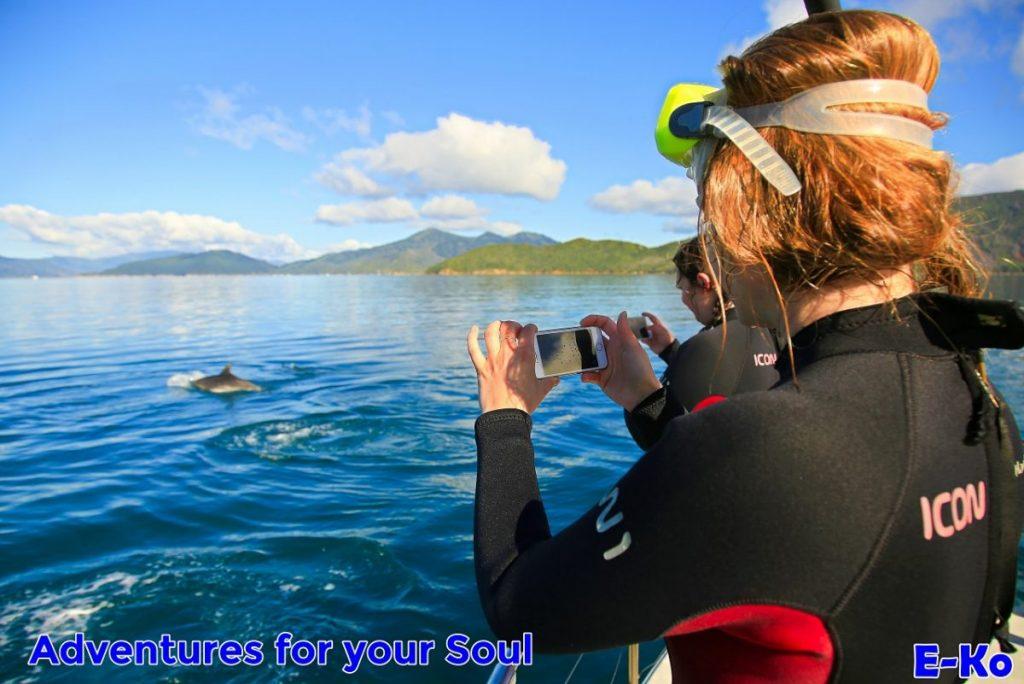 Filming Bottlenose Dolphin