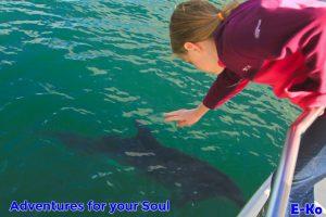 Girl waving at Dolphin