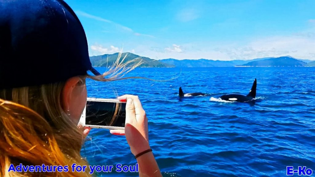 Orca Viewing with Phone camera