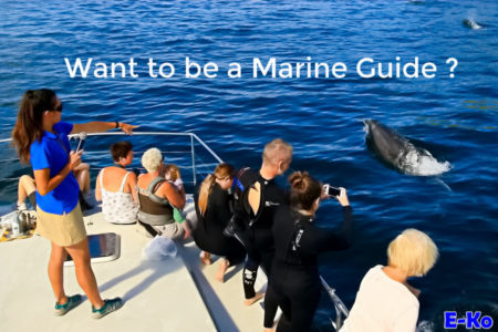Want to be a Marine Guide